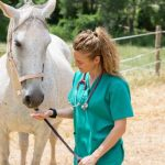 Donate Horse To Vet School – What Happen To Them?