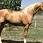How To Register A Horse With No Papers?