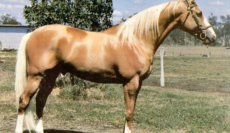 register a horse with no paper